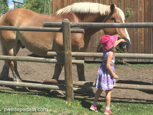 Girl touching a horse in Heritage Park, Calgary.