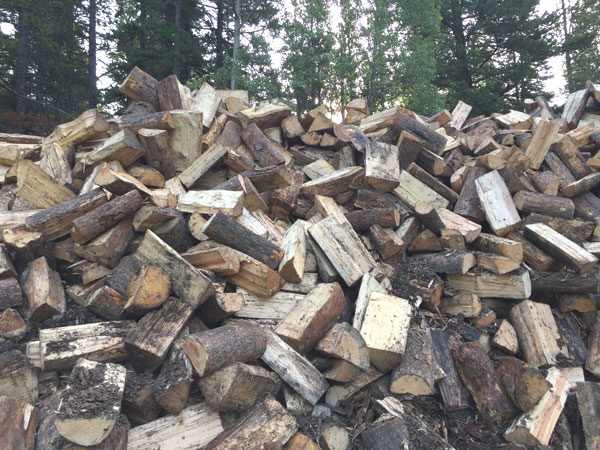 Free firewood at Tunnel Mountain - Village I Campground