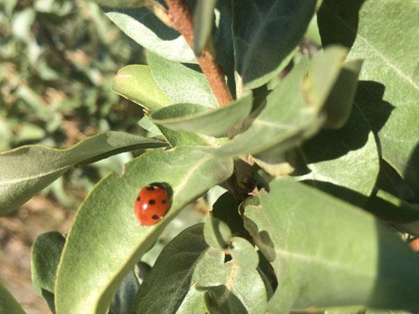 Ladybug in a leaf